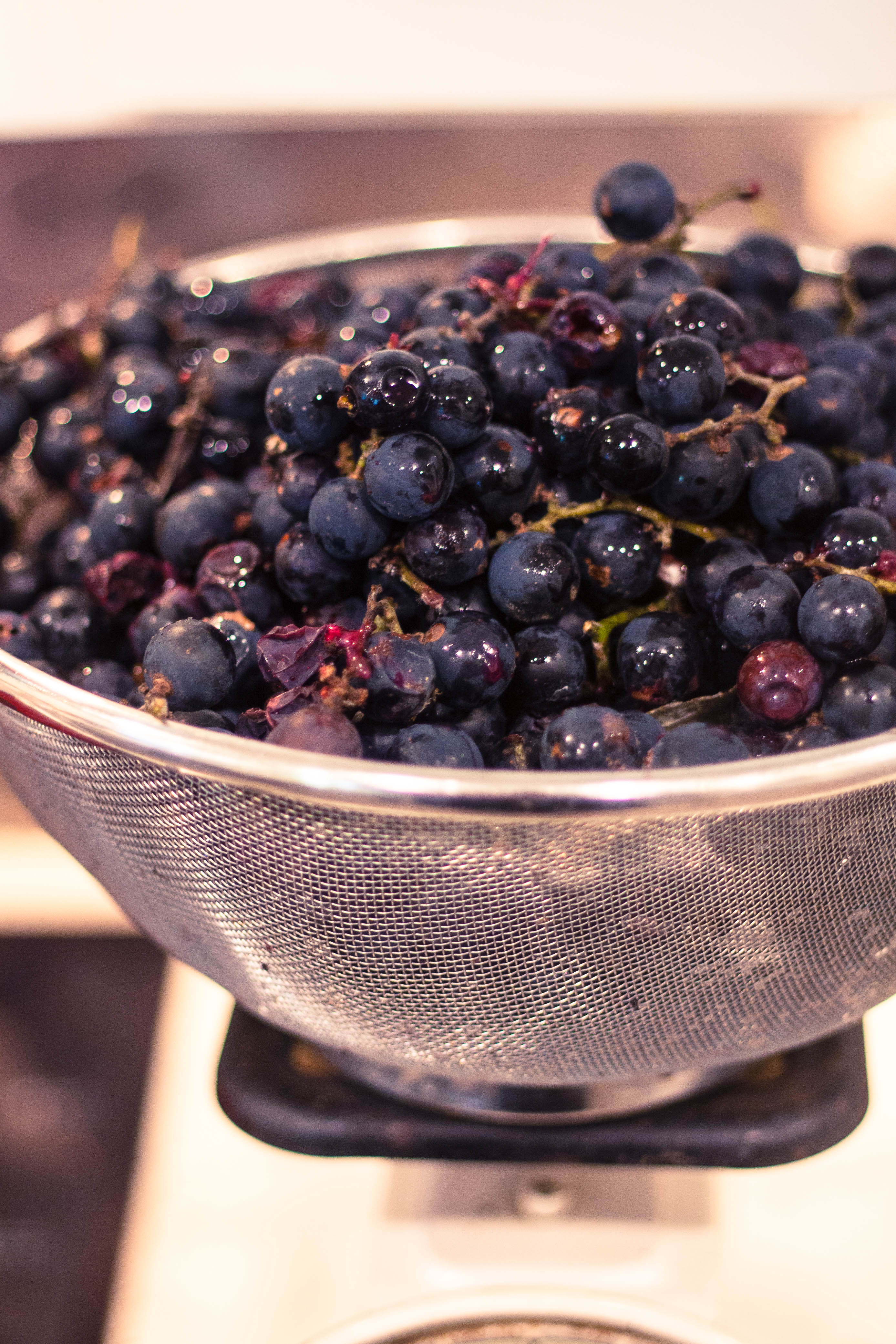 how-to-make-wild-mustang-grape-jelly-recipe