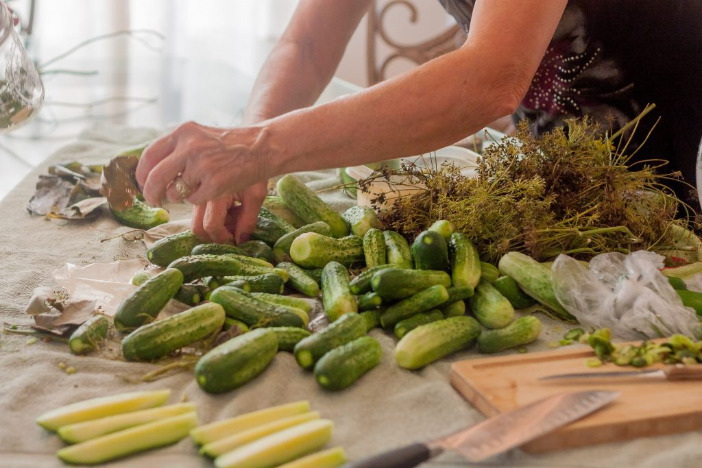 Jeanette Zett Stephens picking cucumbers for pickling