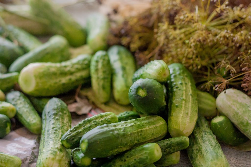 pickling cucumbers | JenniferCooks.com